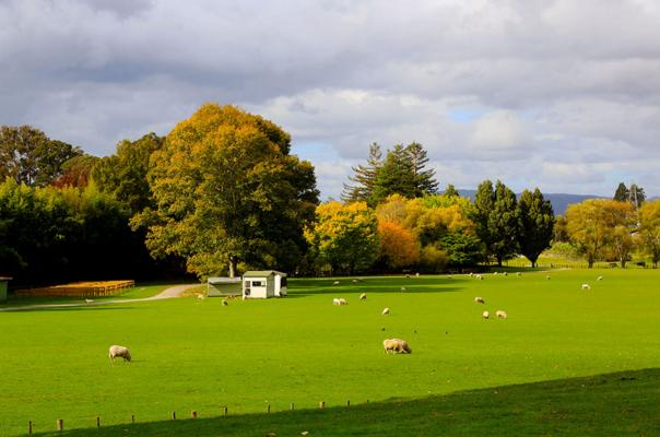去新西兰留学好不好,新西兰留学有哪些优势?