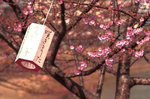 日本留学哪里好?为什么都喜欢去日本留学!